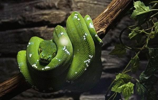 Виды-змей-Описания-названия-и-особенности-видов-змей-31