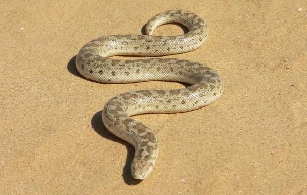 Виды-змей-Описания-названия-и-особенности-видов-змей-32