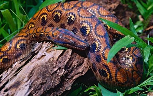 Виды-змей-Описания-названия-и-особенности-видов-змей-33