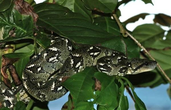 Виды-змей-Описания-названия-и-особенности-видов-змей-35