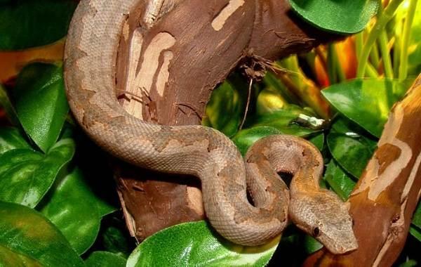 Виды-змей-Описания-названия-и-особенности-видов-змей-36