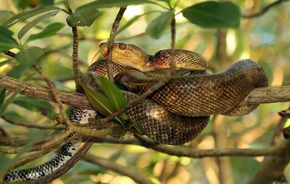 Виды-змей-Описания-названия-и-особенности-видов-змей-37