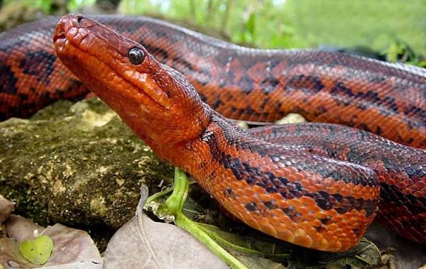 Виды-змей-Описания-названия-и-особенности-видов-змей-38