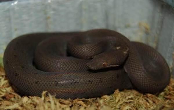 Виды-змей-Описания-названия-и-особенности-видов-змей-39