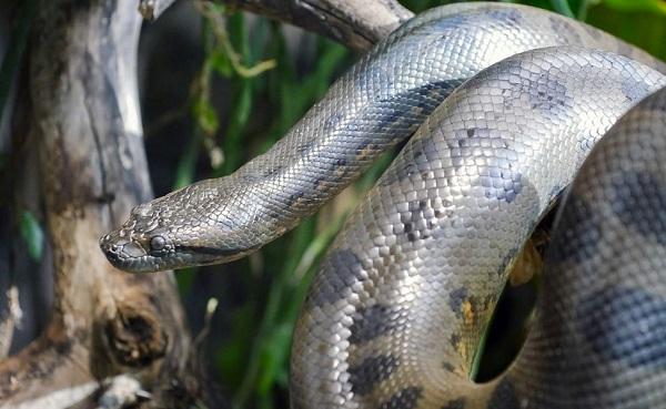 Виды-змей-Описания-названия-и-особенности-видов-змей-40