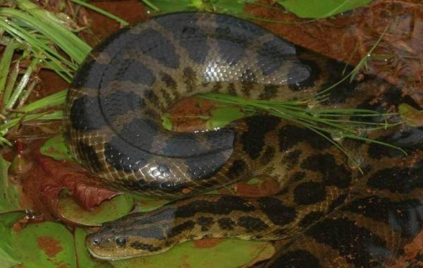 Виды-змей-Описания-названия-и-особенности-видов-змей-41