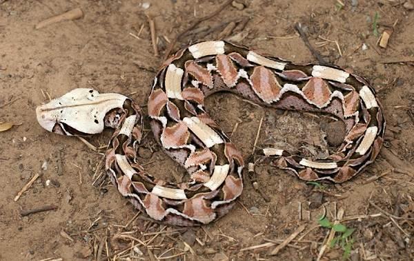 Виды-змей-Описания-названия-и-особенности-видов-змей-5