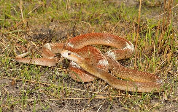 Виды-змей-Описания-названия-и-особенности-видов-змей-7