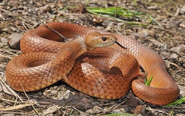 Виды-змей-Описания-названия-и-особенности-видов-змей-8