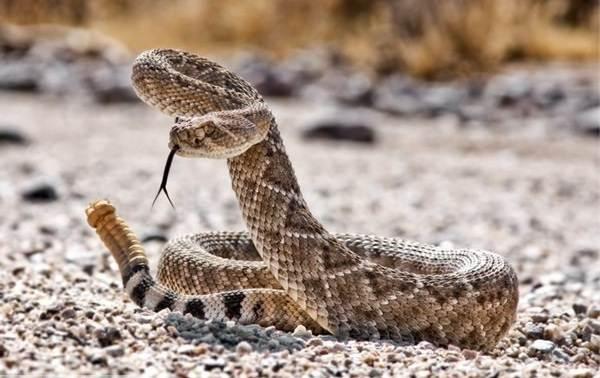 Виды-змей-Описания-названия-и-особенности-видов-змей-9