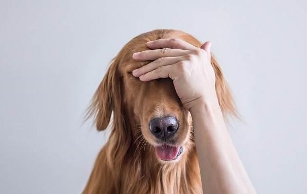 Конъюнктивит-глаз-у-собак-Причины-симптомы-виды-и-лечение-конъюнктивита-у-собак-10
