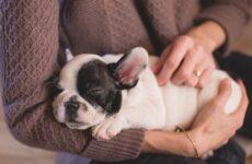 Конъюнктивит глаз у собак. Причины, симптомы, виды и лечение конъюнктивита у собак