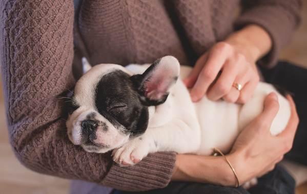 Конъюнктивит-глаз-у-собак-Причины-симптомы-виды-и-лечение-конъюнктивита-у-собак-11