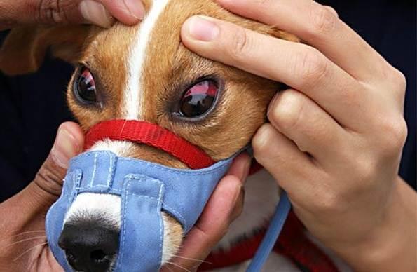 Конъюнктивит-глаз-у-собак-Причины-симптомы-виды-и-лечение-конъюнктивита-у-собак-7