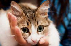 Конъюнктивит у кошек. Симптомы, причины, лечение и профилактика болезни