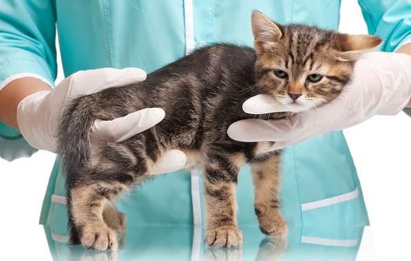 Вакдерм-вакцина-для-кошек-и-собак-Применение-побочные-действия-и-цена-вакдерма-1