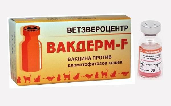 Вакдерм-вакцина-для-кошек-и-собак-Применение-побочные-действия-и-цена-вакдерма-12