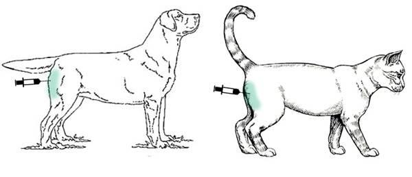 Вакдерм-вакцина-для-кошек-и-собак-Применение-побочные-действия-и-цена-вакдерма-3