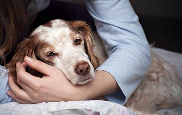 Лептоспироз-у-собак-Описание-особенности-симптомы-и-лечение-лептоспироза-10