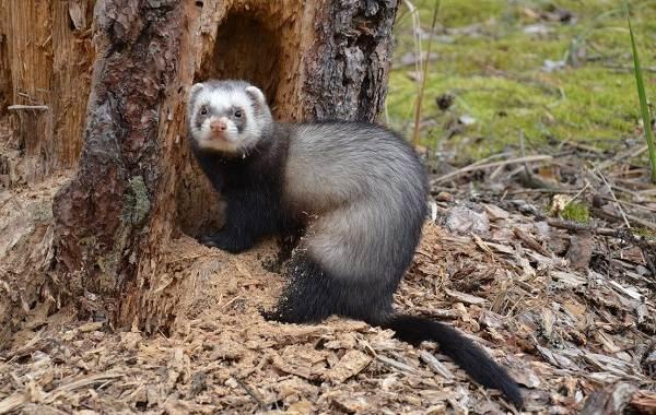 Животные-Франции-Описание-названия-виды-и-фото-животных-Франции-12