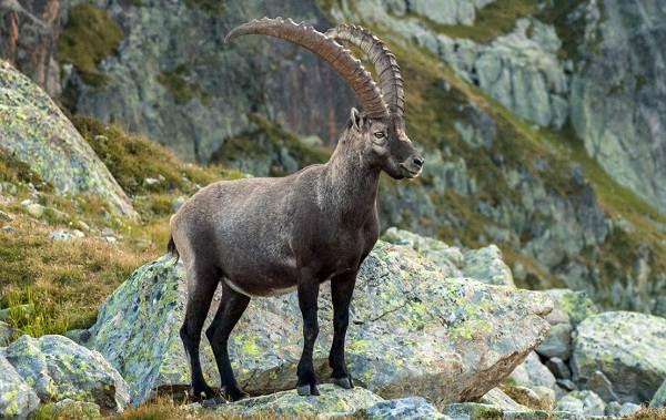 Животные-Франции-Описание-названия-виды-и-фото-животных-Франции-13