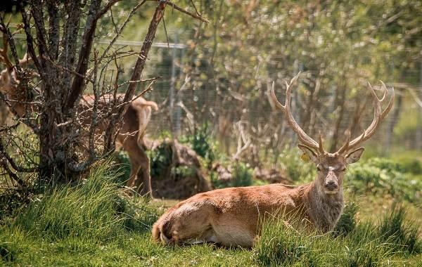 Животные-Франции-Описание-названия-виды-и-фото-животных-Франции-16