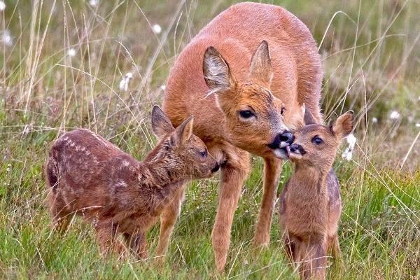 Животные-Франции-Описание-названия-виды-и-фото-животных-Франции-17