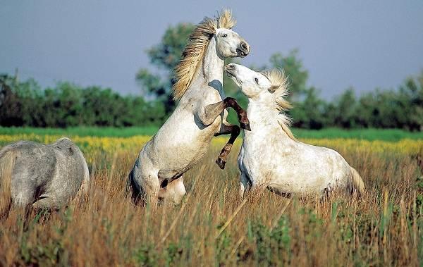 Животные-Франции-Описание-названия-виды-и-фото-животных-Франции-2