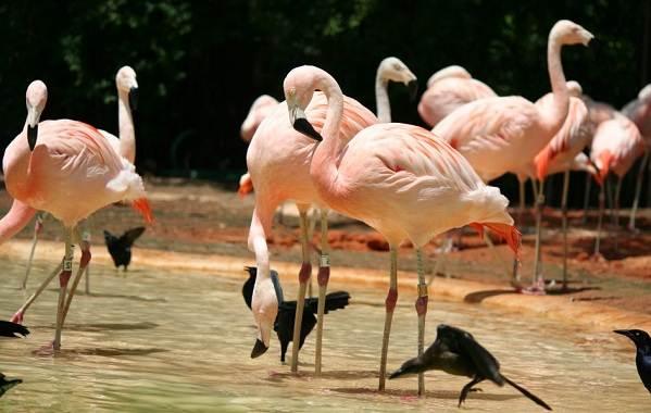 Животные-Франции-Описание-названия-виды-и-фото-животных-Франции-22