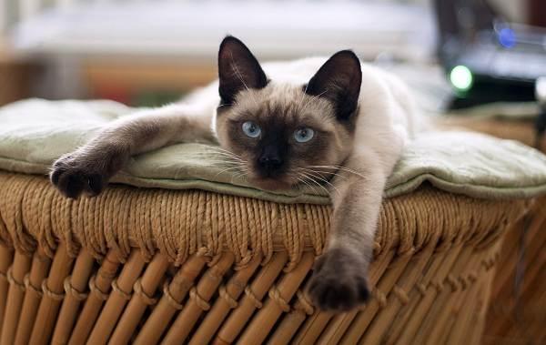 Животные-Франции-Описание-названия-виды-и-фото-животных-Франции-31