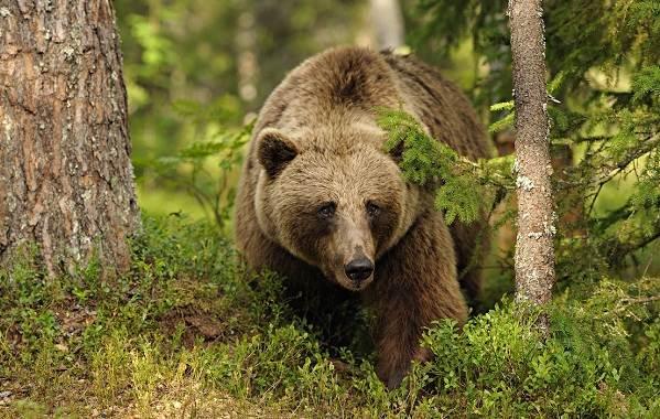 Животные-Франции-Описание-названия-виды-и-фото-животных-Франции-4