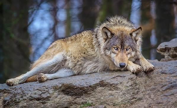 Животные-Франции-Описание-названия-виды-и-фото-животных-Франции-5
