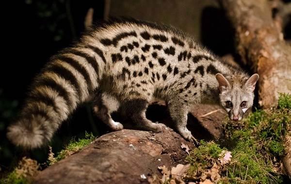 Животные-Франции-Описание-названия-виды-и-фото-животных-Франции-6