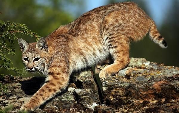 Животные-Франции-Описание-названия-виды-и-фото-животных-Франции-7