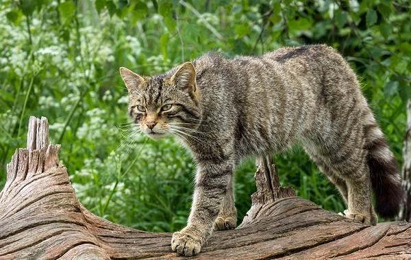 Животные-Франции-Описание-названия-виды-и-фото-животных-Франции-8
