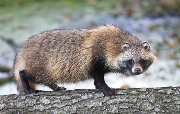 Животные-Франции-Описание-названия-виды-и-фото-животных-Франции-9