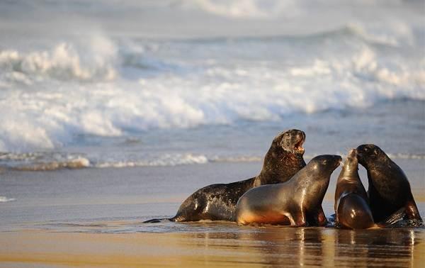 Животные-Новой-Зеландии-Описание-названия-виды-и-фото-животных-Новой-Зеландии-1