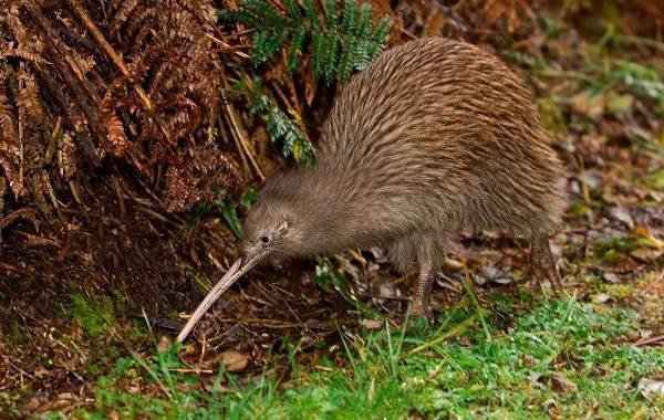 Животные-Новой-Зеландии-Описание-названия-виды-и-фото-животных-Новой-Зеландии-19