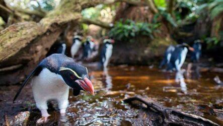 Животные Новой Зеландии. Описание, названия, виды и фото животных Новой Зеландии