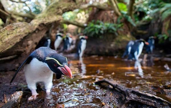 Животные-Новой-Зеландии-Описание-названия-виды-и-фото-животных-Новой-Зеландии-2