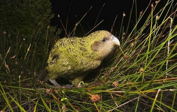 Животные-Новой-Зеландии-Описание-названия-виды-и-фото-животных-Новой-Зеландии-20