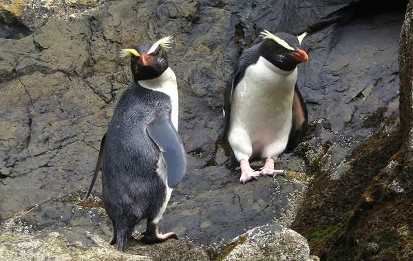 Животные-Новой-Зеландии-Описание-названия-виды-и-фото-животных-Новой-Зеландии-21