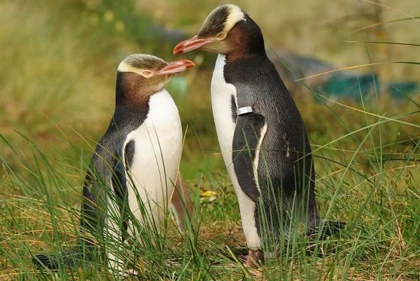 Животные-Новой-Зеландии-Описание-названия-виды-и-фото-животных-Новой-Зеландии-23