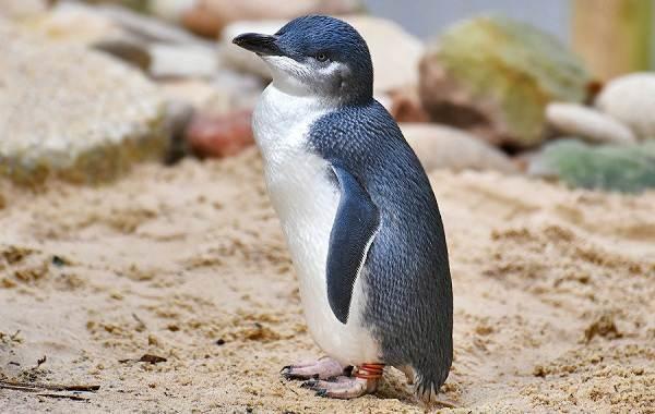 Животные-Новой-Зеландии-Описание-названия-виды-и-фото-животных-Новой-Зеландии-24
