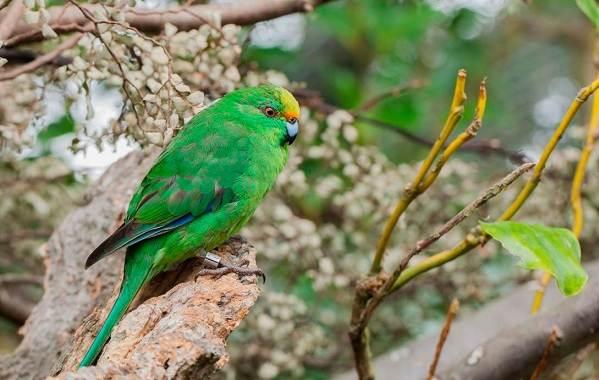 Животные-Новой-Зеландии-Описание-названия-виды-и-фото-животных-Новой-Зеландии-27