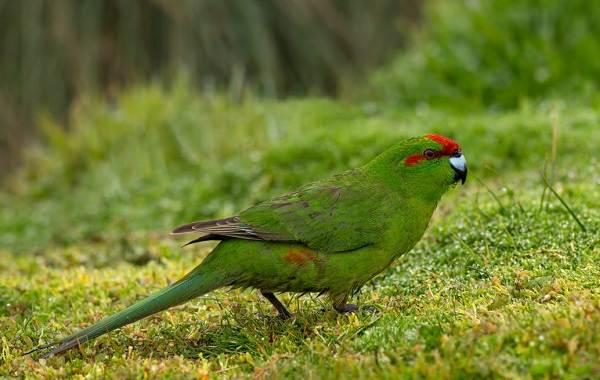 Животные-Новой-Зеландии-Описание-названия-виды-и-фото-животных-Новой-Зеландии-28