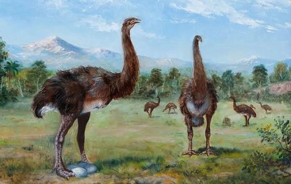 Животные-Новой-Зеландии-Описание-названия-виды-и-фото-животных-Новой-Зеландии-3