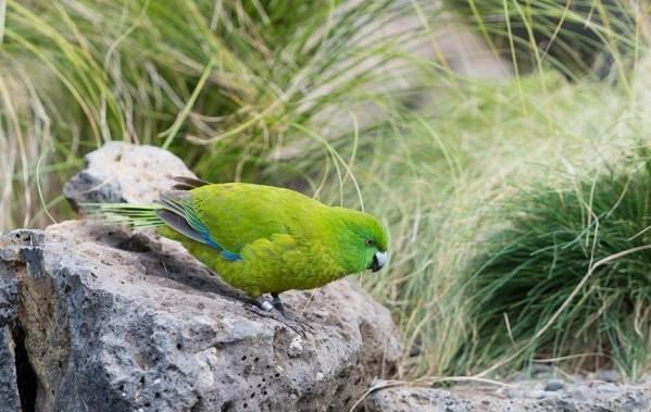 Животные-Новой-Зеландии-Описание-названия-виды-и-фото-животных-Новой-Зеландии-30