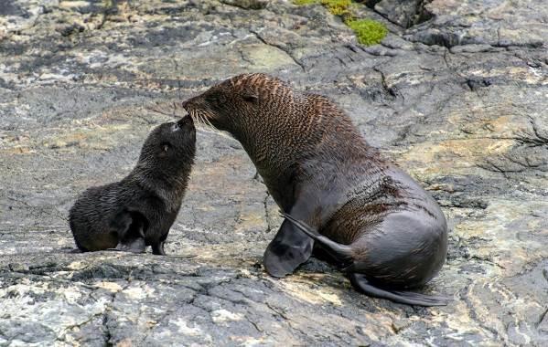 Животные-Новой-Зеландии-Описание-названия-виды-и-фото-животных-Новой-Зеландии-31