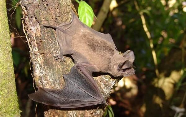 Животные-Новой-Зеландии-Описание-названия-виды-и-фото-животных-Новой-Зеландии-33